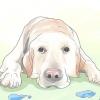 Comment comprendre le syndrome du petit chien