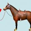 Comment untack un cheval
