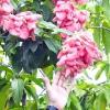 Comment arroser les plantes avec du café